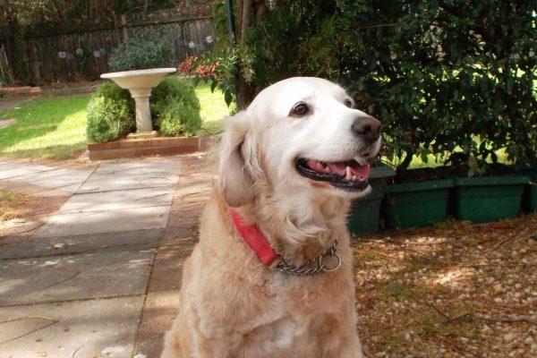 Backyard dog walking area