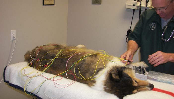 Dr. Bartholomay performing an acupuncture treatment.