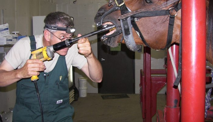 Dr.  Reichert doing a teeth float on an equine patient.