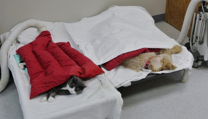 Patients recovering post-anesthesia from surgery.