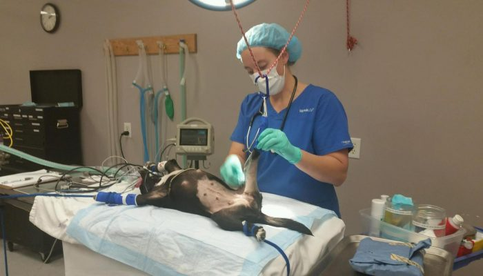 Technician Michelle doing a surgical scrub on an orthopedic surgery.