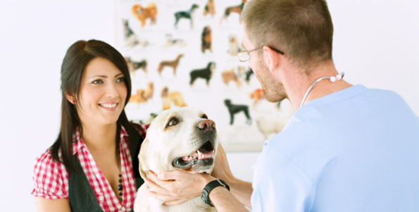 Veterinary Clinic Chelsea