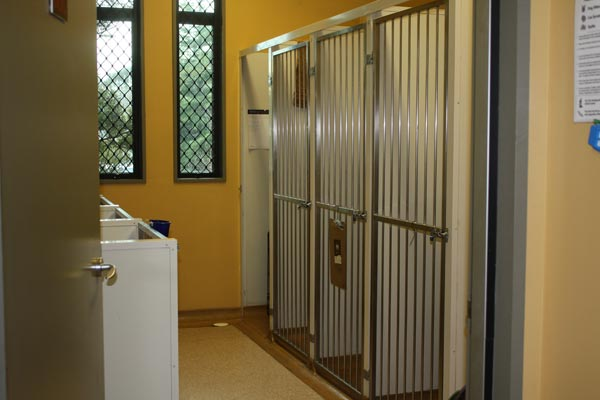 cattery5