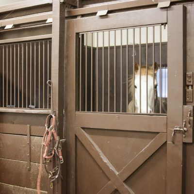 Equine Stalls