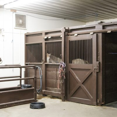 Equine Treatment Area