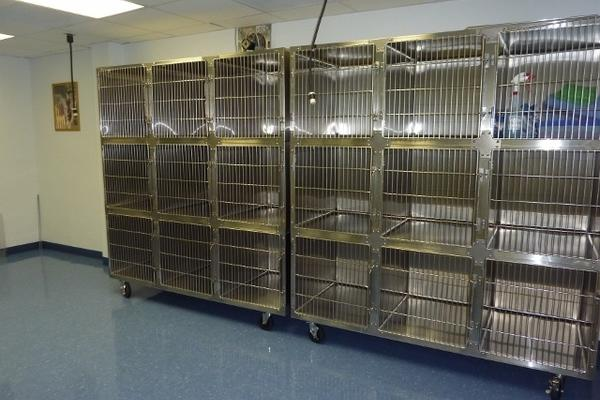 If you choose to schedule an appointment for your cat(s) to stay with us for the day, this is where they will stay.