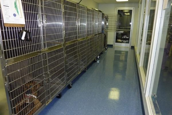If you choose to schedule an appointment to have your dog(s) stay with us for the day, this is where they will stay.