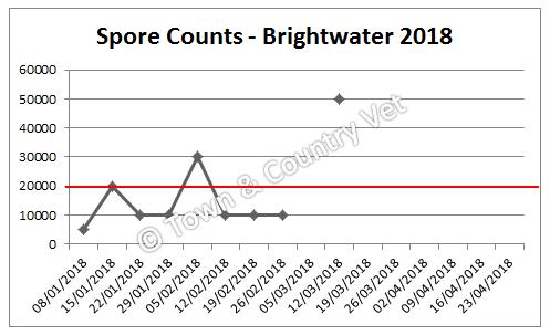 brightwater 2018